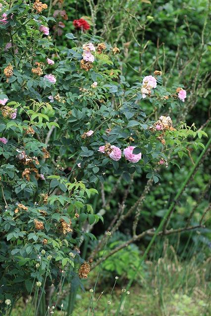 IMG_9707那須花と体験の森