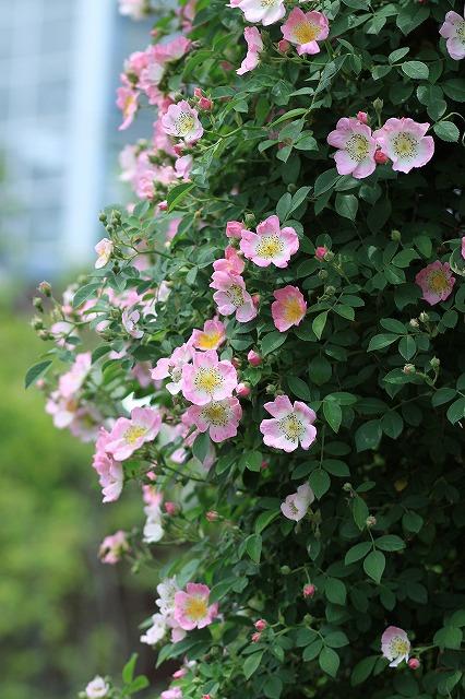 IMG_9709那須花と体験の森
