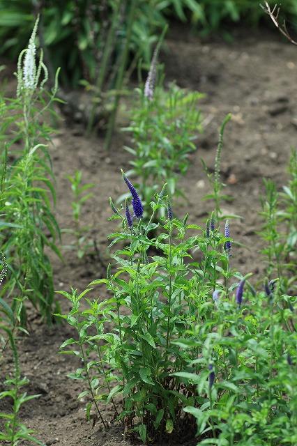 IMG_9711那須花と体験の森