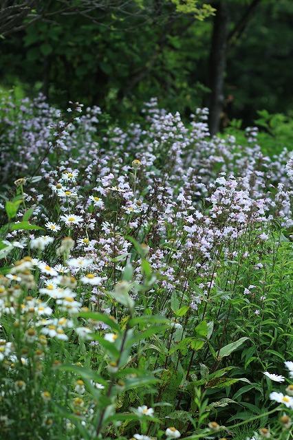 IMG_9713那須花と体験の森