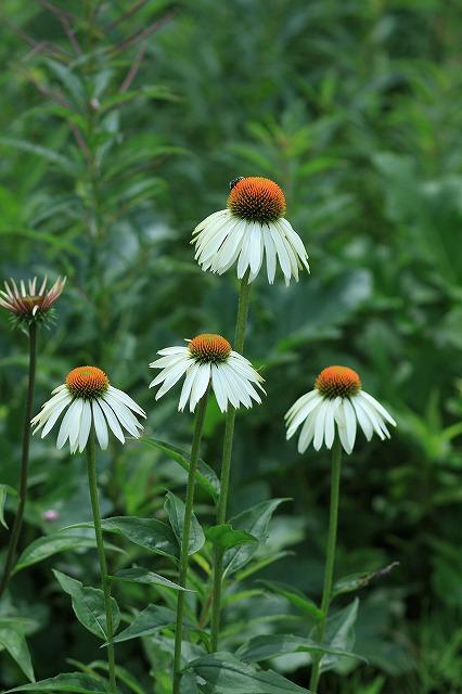 IMG_9721那須花と体験の森