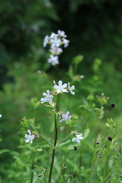IMG_9724那須花と体験の森