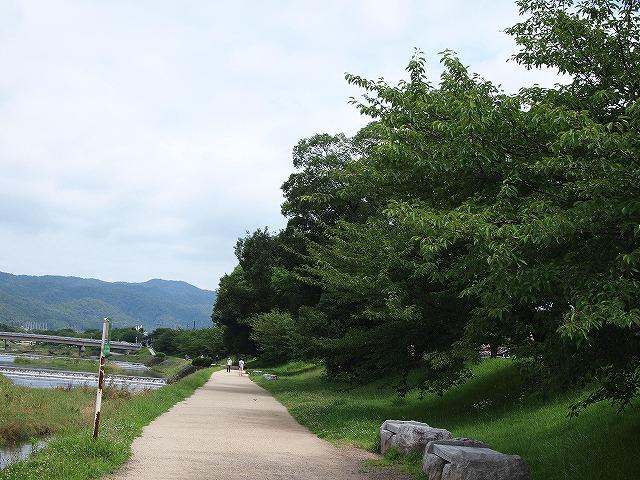 016半木の道