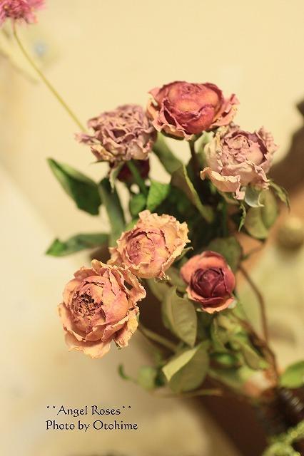 IMG_1639お庭のバラ^^