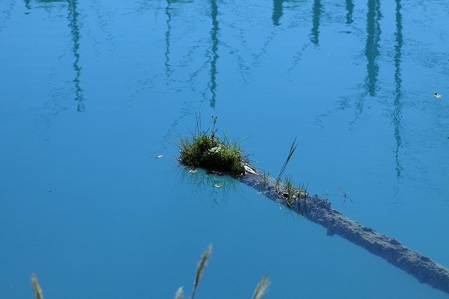 IMG_1771青い池