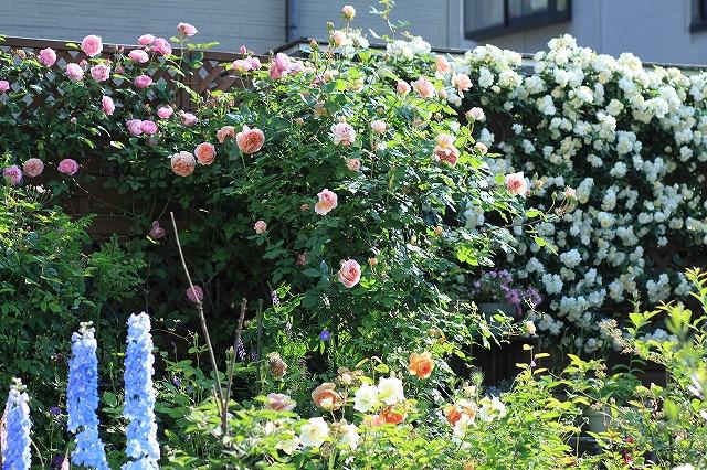 20120519202631930春の乙姫ガーデン