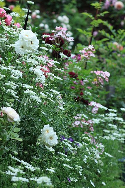 20120526091934c8d春の乙姫ガーデン