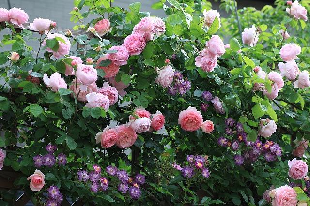 20120526220138d75春の乙姫ガーデン