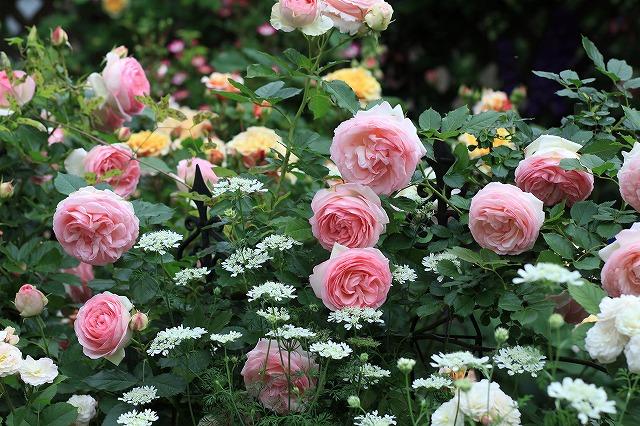 201205260915169b8春の乙姫ガーデン