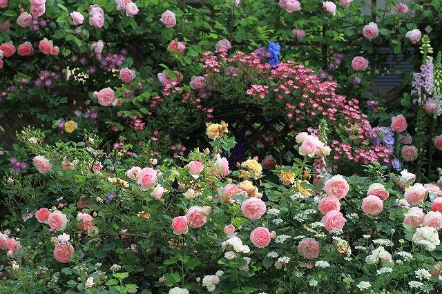 201205262203087ce春の乙姫ガーデン