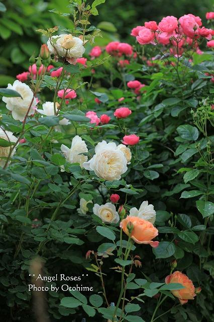 2012052118442565c春の乙姫ガーデン