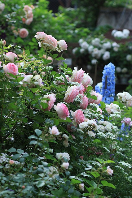 2012052622024524e春の乙姫ガーデン