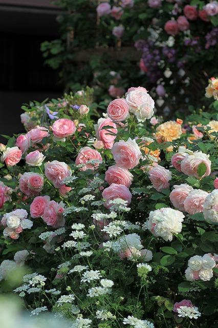 2012052818453820b春の乙姫ガーデン