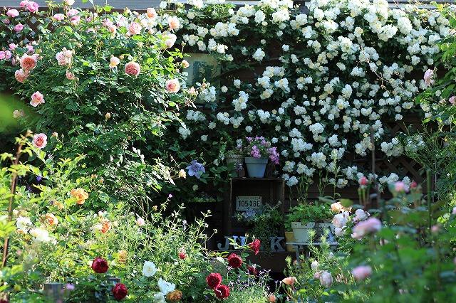 20120519202756993春の乙姫ガーデン
