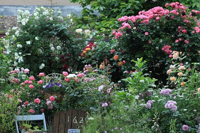 20120526091702753春の乙姫ガーデン