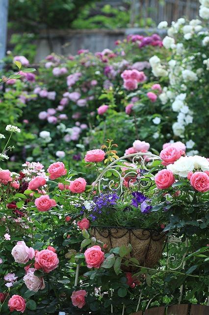 20120526215642734春の乙姫ガーデン