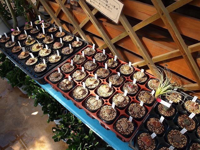 012むさしの花壇