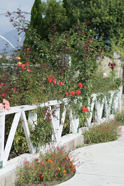 IMG_3116ハーブ庭園