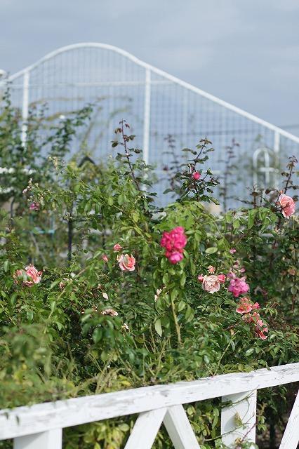 IMG_3117ハーブ庭園