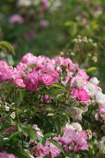 IMG_3124ハーブ庭園