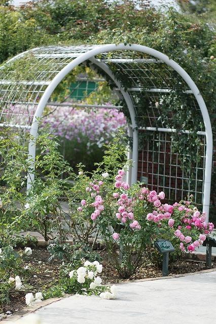 IMG_3131ハーブ庭園