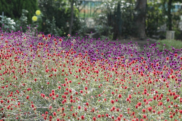 IMG_3135ハーブ庭園