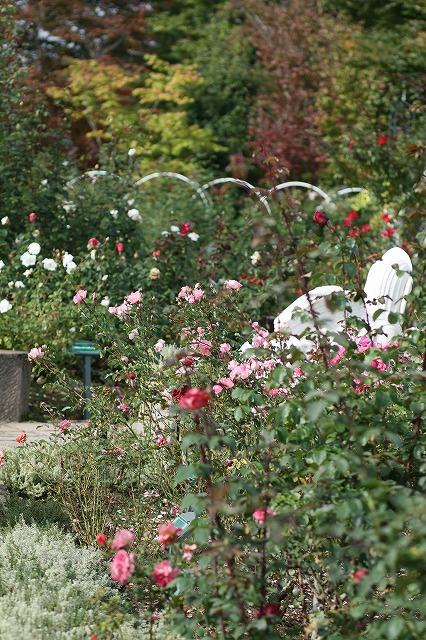 IMG_3138ハーブ庭園