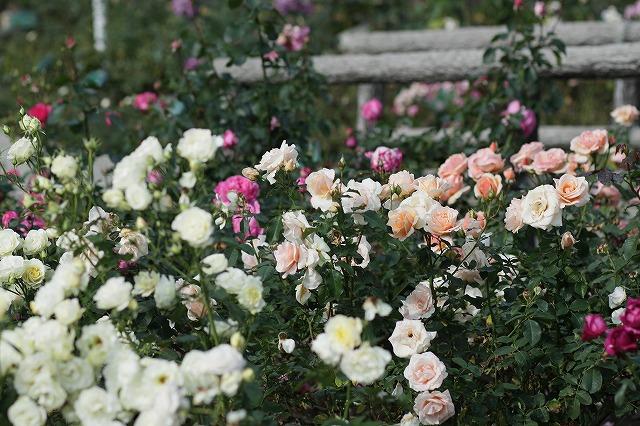 IMG_3148ハーブ庭園
