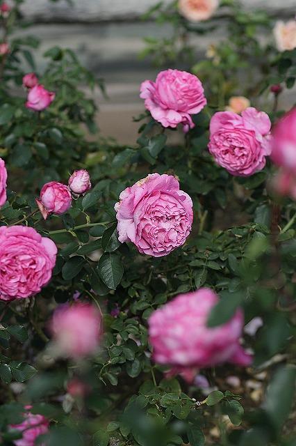 IMG_3150ハーブ庭園