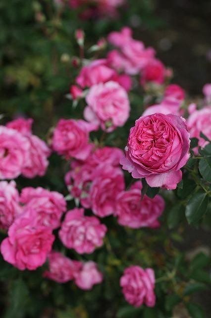 IMG_3158ハーブ庭園