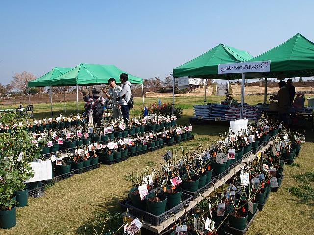 004花菜ガーデン
