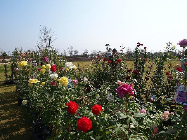 005花菜ガーデン