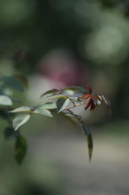IMG_3243花菜ガーデン