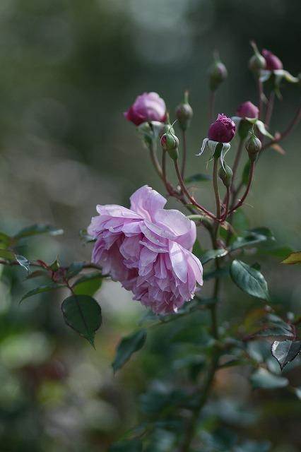 IMG_3316花菜ガーデン