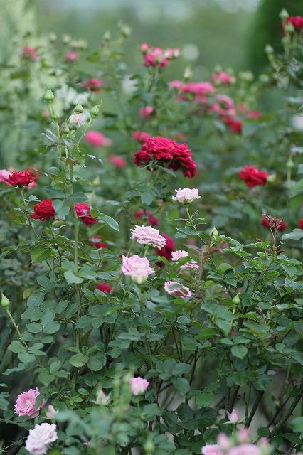 IMG_3362大船植物園