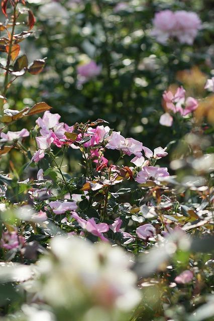 IMG_3401大船植物園