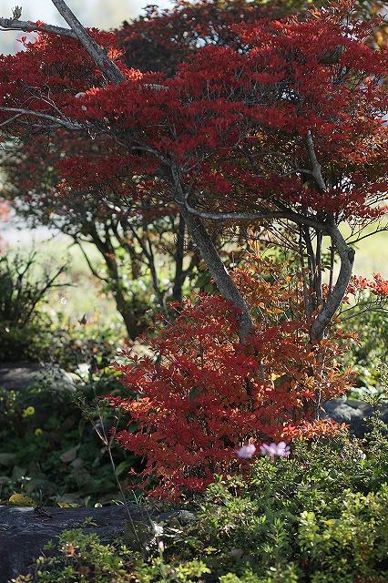 IMG_3469実家の庭