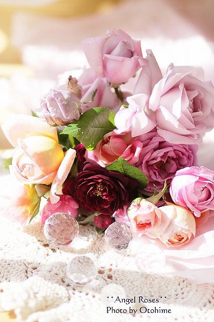 IMG_3704乙姫ガーデンのバラ