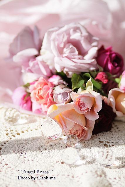 IMG_3728乙姫ガーデンのバラ