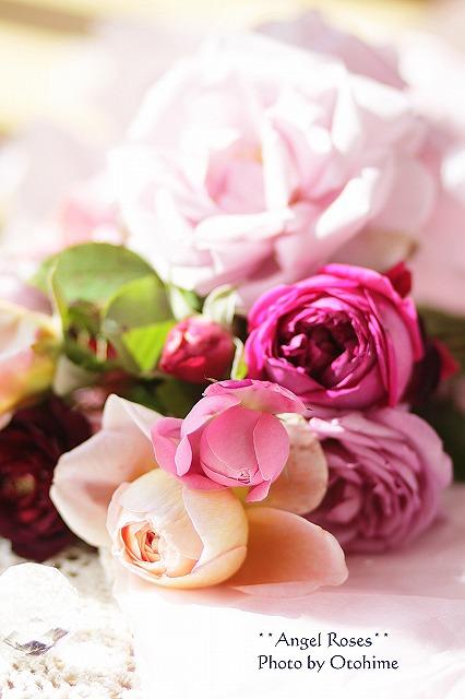 IMG_3732乙姫ガーデンのバラ