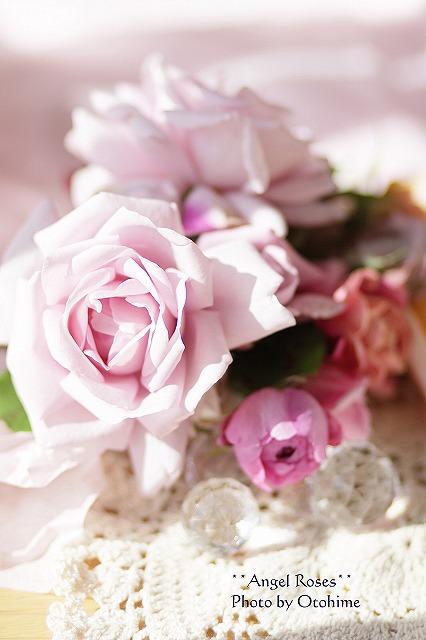 IMG_3744乙姫ガーデンのバラ