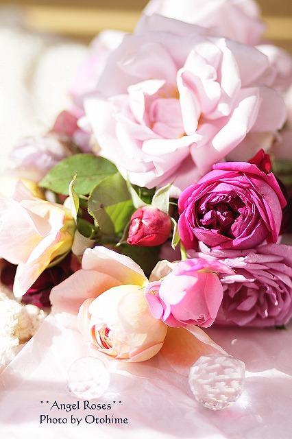 IMG_3748乙姫ガーデンのバラ