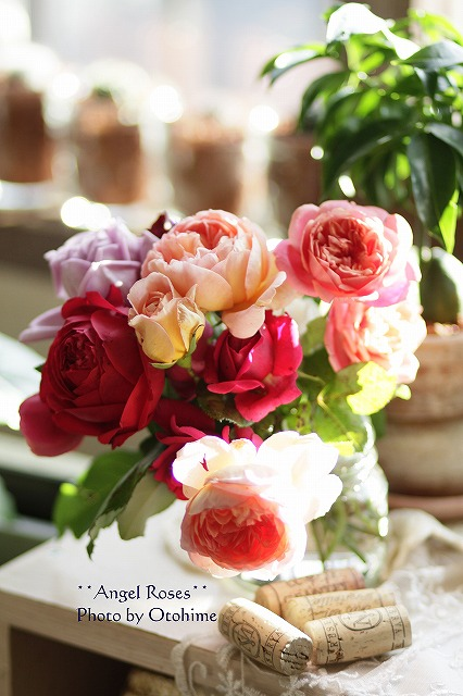 IMG_3787お庭のバラ達
