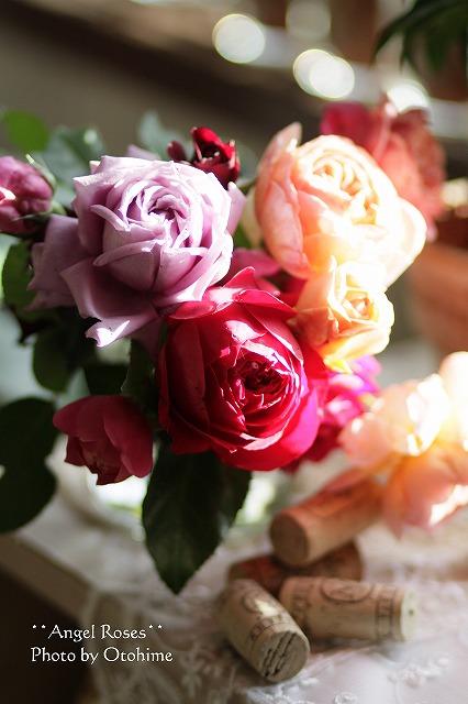 IMG_3772お庭のバラ