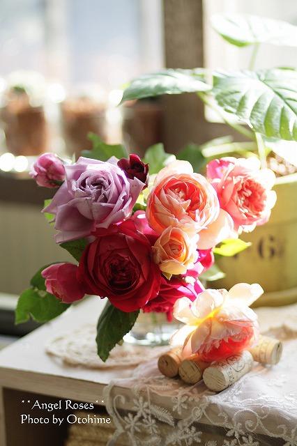 IMG_3839お庭のバラ達