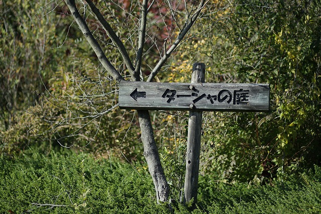 IMG_3643花フェスタ