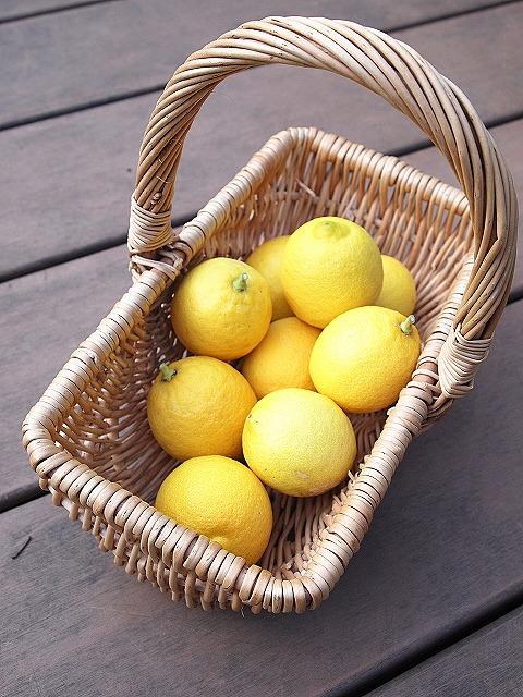 007レモン収穫