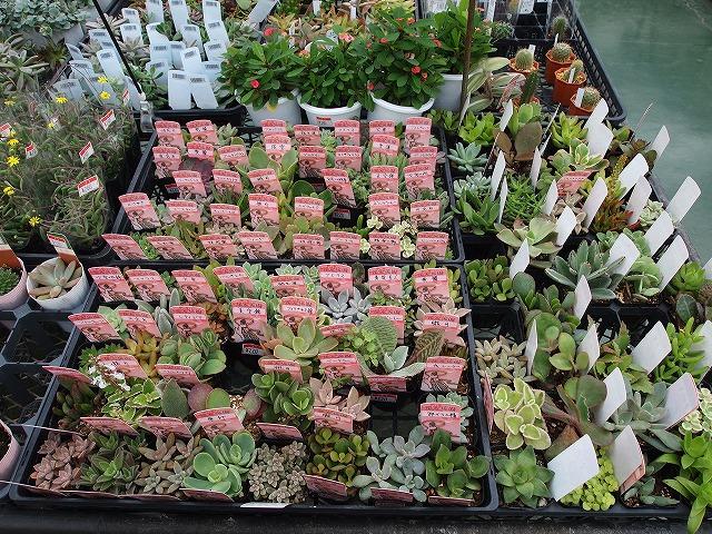 PA232723_01日本ライン花木センター