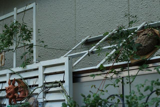 IMG_7821乙姫ガーデン