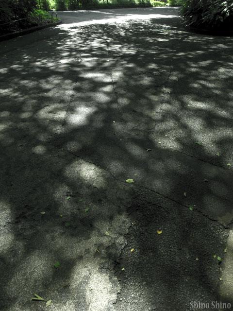 sfc2_120704